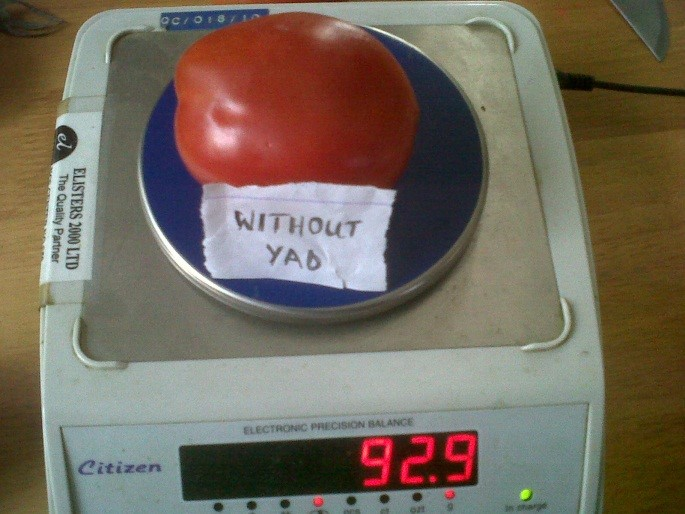 A Tomato without YAD